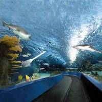 South carolina aquarium discount coupons