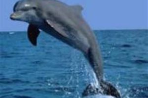 Myrtle Beach Dolphin Cruise Discounts
