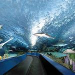 Discount at Ripley's Aquarium Myrtle Beach