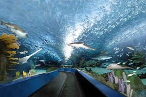 Aquarium Myrtle Beach Discount