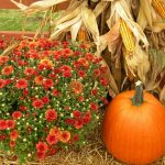 FREE Admission to Conway Fall Festival