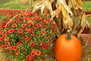 FREE Admission to SUMC Fall Festival