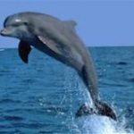 Myrtle Beach Dolphin Cruise Discounts