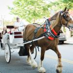 FREE Carriage Rides at The Market Common